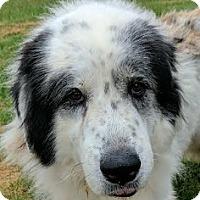 Adopt A Pet :: Matthew - Silver Spring, MD