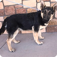 Adopt A Pet :: Salsa - Artesia, NM