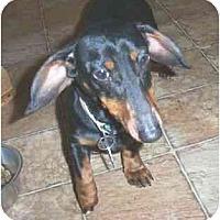 Adopt A Pet :: Hootie - Lawndale, NC