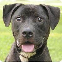 Adopt A Pet :: Garcia - Chicago, IL