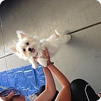 Adopt A Pet :: Cody - Rescue, CA