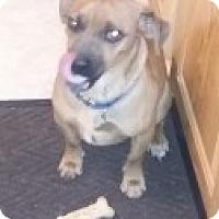 Adopt A Pet :: Lenny - Strasburg, CO