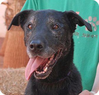 Retriever (Unknown Type) Mix Dog for adoption in Las Vegas, Nevada - Justin