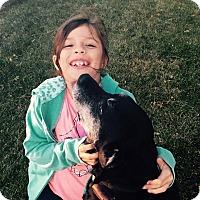 Adopt A Pet :: Sasha - Lewisville, IN