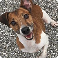 Adopt A Pet :: SPANKY - Terra Ceia, FL