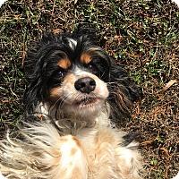 Adopt A Pet :: Alexis - Adopted! - Kannapolis, NC