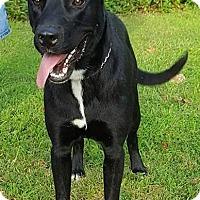 Adopt A Pet :: Prince - Somonauk, IL