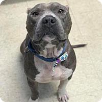 Adopt A Pet :: Noah - Bradenton, FL