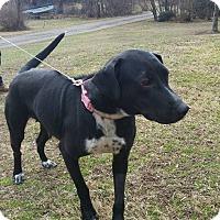 Adopt A Pet :: Eve - oxford, NJ