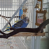 Adopt A Pet :: Peanut and Stormie - Grandview, MO