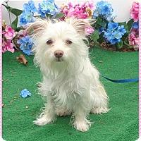 Adopt A Pet :: COOKIE & CHLOE available 3/29 - Marietta, GA