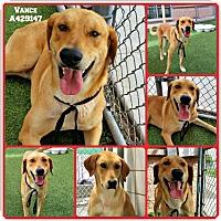 Adopt A Pet :: Vance - Portland, OR