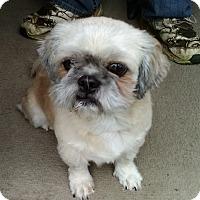 Adopt A Pet :: Kazuki - Florence, KY