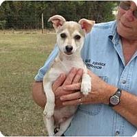 Adopt A Pet :: Eddie pup - Houston, TX