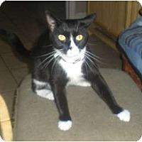 Adopt A Pet :: Holly - Summerville, SC