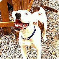 Adopt A Pet :: Silas - Hartsville, TN