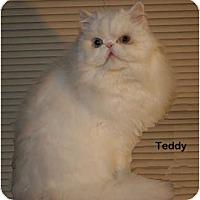 Adopt A Pet :: Teddy - Portland, OR