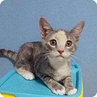 Adopt A Pet :: Vegas - McDonough, GA