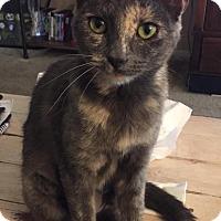 Adopt A Pet :: Lucy - Modesto, CA