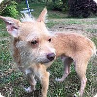 Adopt A Pet :: Jerry - Tumwater, WA