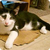Adopt A Pet :: Panzer - North Highlands, CA
