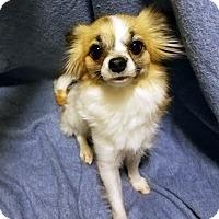 Adopt A Pet :: Nessie-Adopted! - Detroit, MI