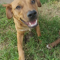 Adopt A Pet :: Cody - Eustace, TX