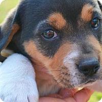 Adopt A Pet :: Fitz - Danbury, CT