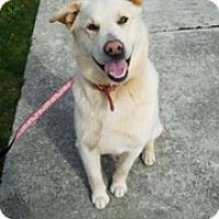 Adopt A Pet :: Captain - Bellingham, WA