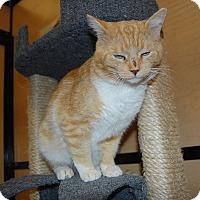Adopt A Pet :: Harlen - Whittier, CA