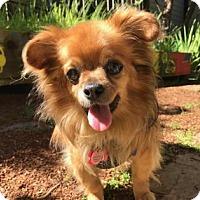 Adopt A Pet :: Remy - San Francisco, CA