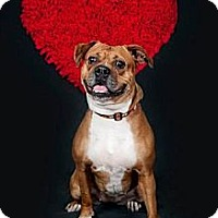 Adopt A Pet :: Stella - Cleveland, OH