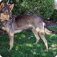 Adopt A Pet :: Paloma - West New York, NJ