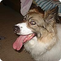 Adopt A Pet :: Dakota - Hamilton, ON