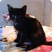 Adopt A Pet :: Mary - N. Billerica, MA