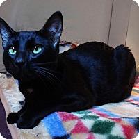 Adopt A Pet :: Cole - N. Billerica, MA