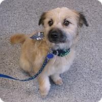 Adopt A Pet :: Tito - North Bend, WA