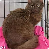 Adopt A Pet :: Teddi - Merrifield, VA