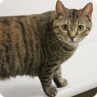 Adopt A Pet :: Jingles - Medina, OH