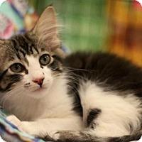 Adopt A Pet :: Teresa - Sacramento, CA