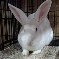 Florida White Mix for adoption in Williston, Florida - Cypress