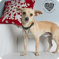 Adopt A Pet :: Kylo - Inglewood, CA