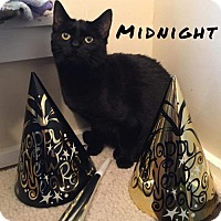 Adopt A Pet :: Midnight - Pittsburgh, PA