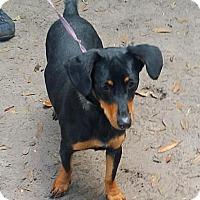 Adopt A Pet :: Slinky - Orlando, FL