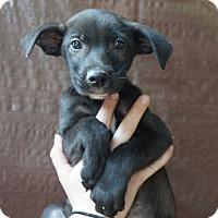 Adopt A Pet :: Hogan - Oviedo, FL