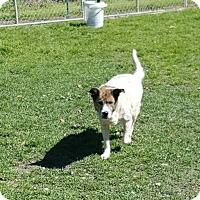Adopt A Pet :: Camellia - Hammond, LA