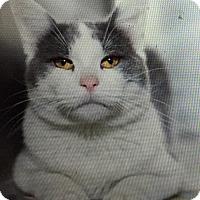 Adopt A Pet :: Solovino - Houston, TX