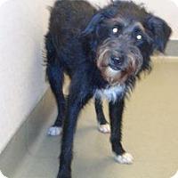 Adopt A Pet :: Spike - Wildomar, CA
