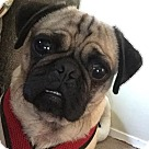Adopt A Pet :: Mister Mason