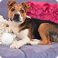 Adopt A Pet :: Jesse - Brattleboro, VT